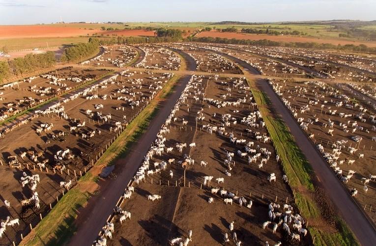 Quanto custa manter um bovino no confinamento?