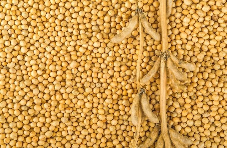 Preços da soja com previsão de subir no Brasil