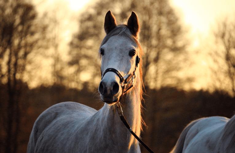 Inverno: saiba quais cuidados contribuem com saúde de equinos em períodos de baixas temperaturas e seca