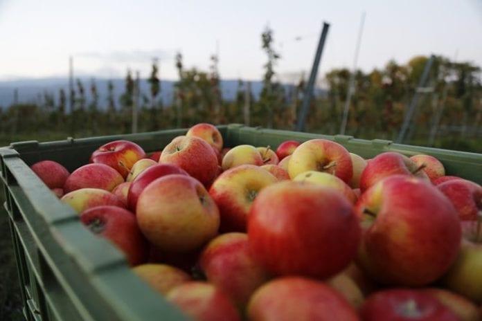 rolnik rolnictwo, Ustawa o przewadze kontraktowej, portal rolny, jabłka,