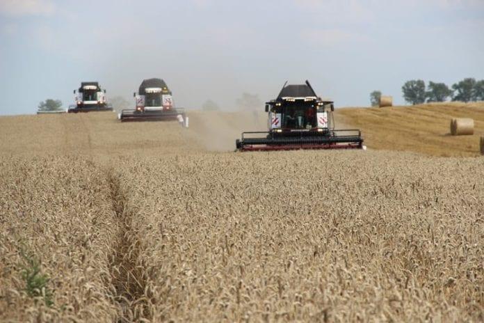 Eksport zbóż, zboża, pszenica, eksport pszenicy, BGŻ BNP Paribas, owies, kukurydza, jęczmień