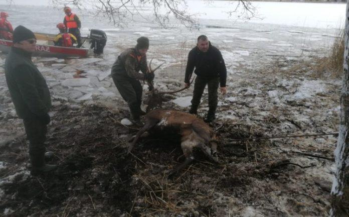 Łowczy Krajowy nagrodził uczestników akcji ratowania jeleni na zamarzniętym jeziorze