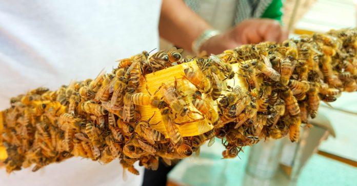 pszczoły, warroza, Unia Europejska, podgrzewanie uli