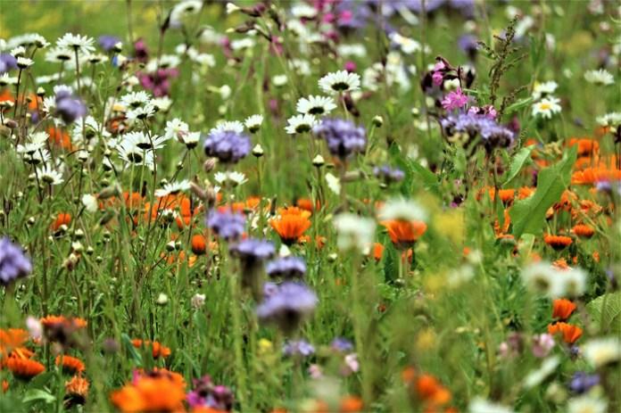 Jak polski Krajowy Plan Odbudowy traktuje bioróżnorodność?