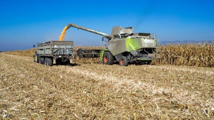 Jedynie 2.4 proc. gruntów rolnych w Bułgarii jest wykorzystywanych do upraw ekologicznych.