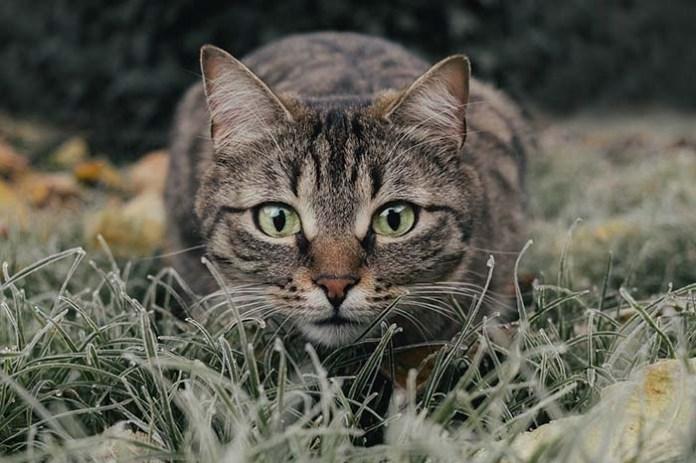 Co roku koty zabijają w Polsce miliony ssaków i ptaków