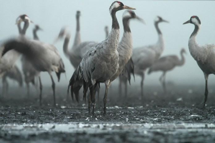 Straty wyrządzane przez zające i ptaki powinny podlegać odszkodowaniom