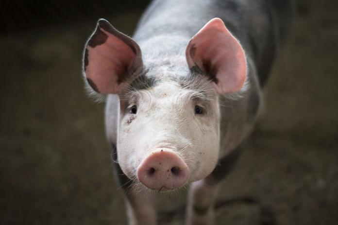 Komisarz UE ds. Rolnictwa w sprawie interwencji na rynku mięsa drobiowego i wieprzowego