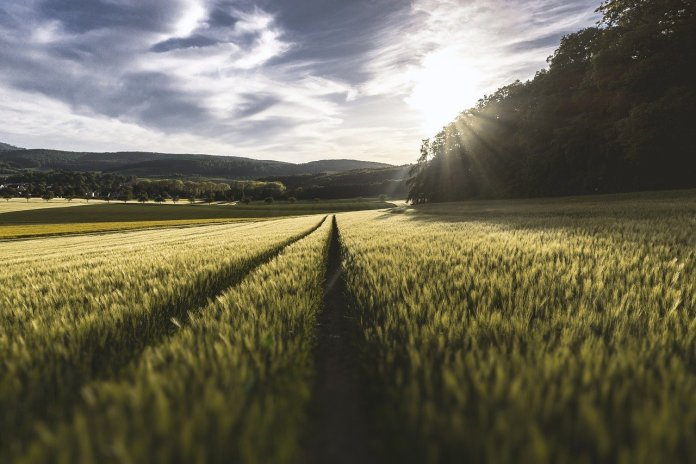 Kryzys klimatyczny zagraża polskiemu rolnictwu czas na działania