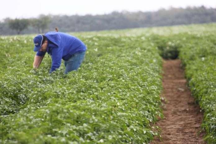 rolnik, Zorvec Enicade, Zorvec, fungicyd, Corteva, ziemniaki, zaraza ziemniaka