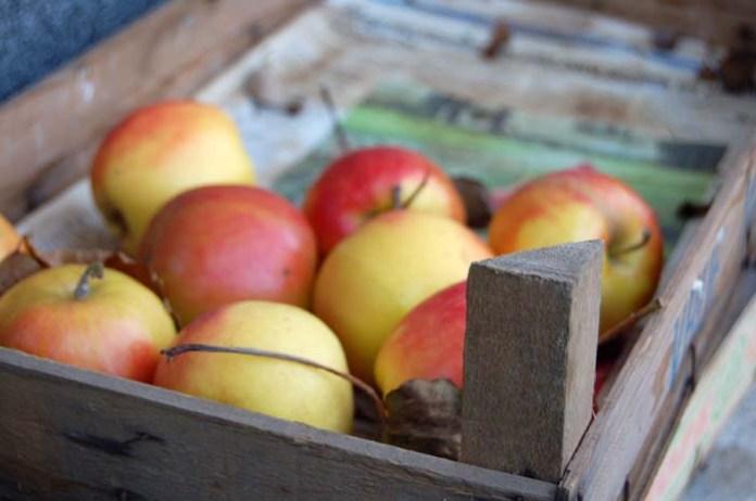 interwencyjny skup jabłek, Jan Krzysztof Ardanowski, ministerstwo rolnictwa, jabłka, ceny jabłek, jabłka pprzemysłowe, Eskimos