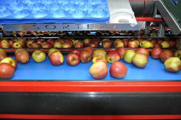 zapasy jabłek deserowych, zapasy jabłek, WAPA, BNP Paribas, Karolina Załuska, jabłka