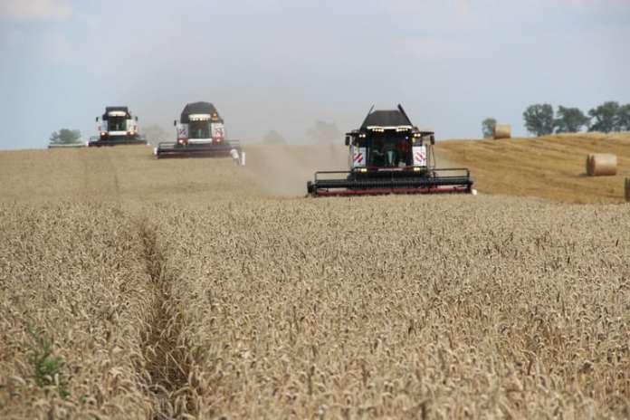 rolnik, rolnictwo, portal rolny, pszenica, jęczmień, ceny żyta, żyto, ceny pszenicy, ceny kukurydzy, ceny zbóż,