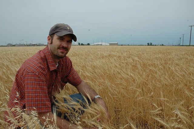 zboża, walka z suszą, susza, szacowanie strat suszowych, Wielkopolska Izba Rolnicza