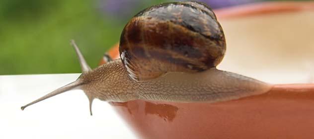 Na Warmii i Mazurach rusza sezon na ślimaka winniczka