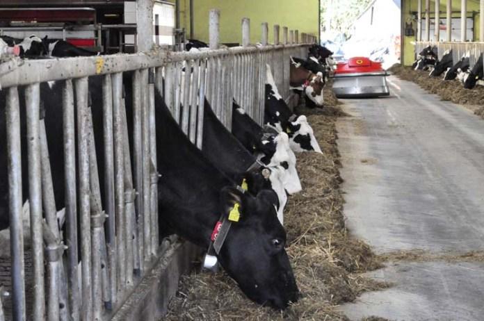 rolnik, ustawa o organizacji hodowli i rozrodzie zwierząt gospodarskich, hodowla, rozród