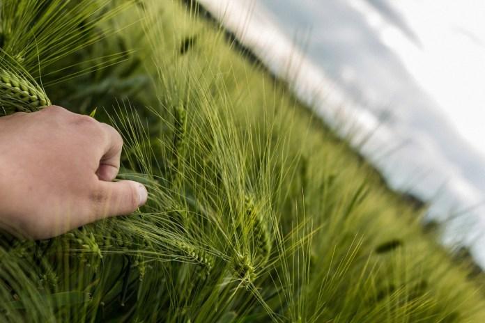 Egzamin na inspektorów rolnictwa ekologicznego