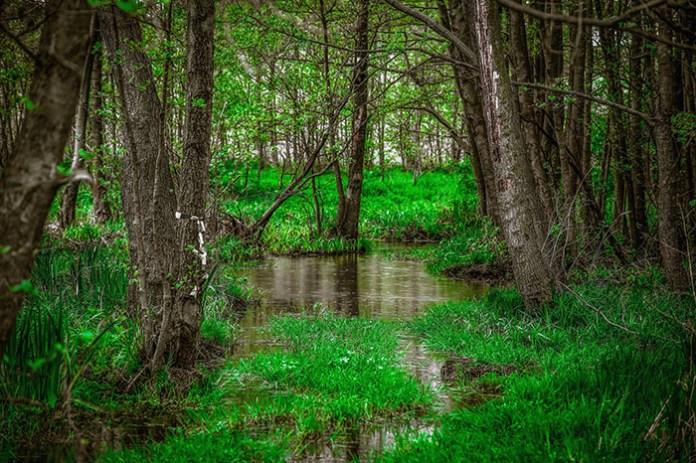 Chroniąc mokradła możemy przeciwdziałać kryzysowi wodnemu