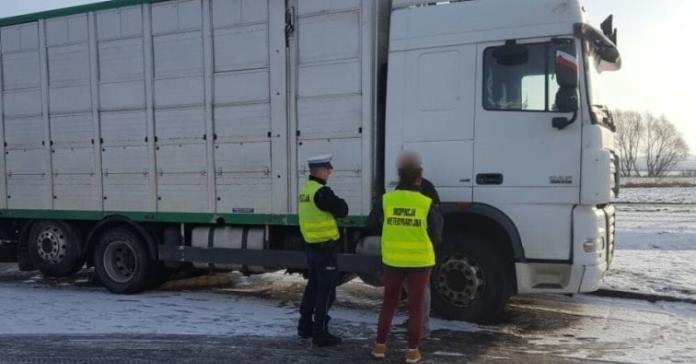 transport zwierząt, przejście graniczne dla transportu zwierząt