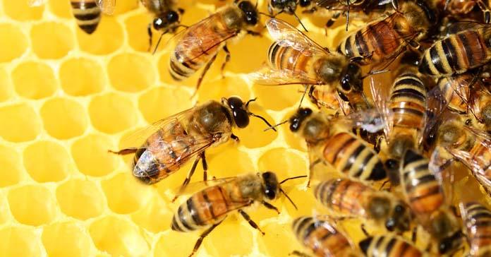 pszczoły, pszczelarze, ochrona pszczół,