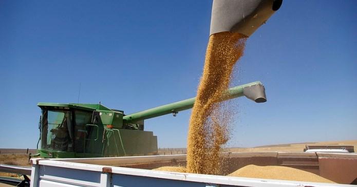 AgroNawigator, ceny pszenicy, ceny zbóż, zboża