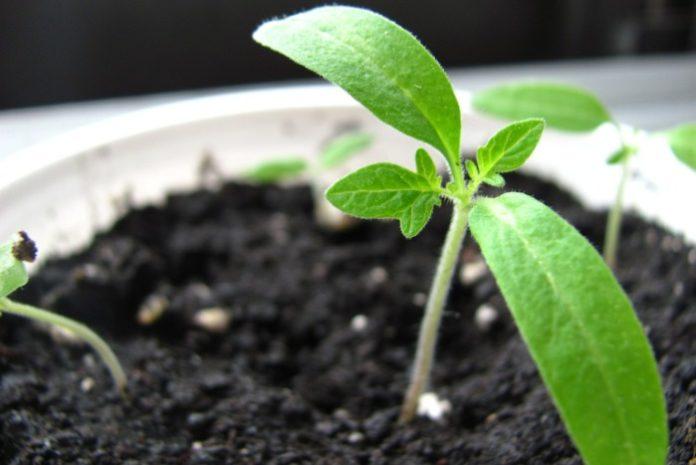 VITASEED, kondycjonowanie nasion, przechowywanie nasion, kiełkowanie, rolnictwo, Optigrow Vitalizer90,