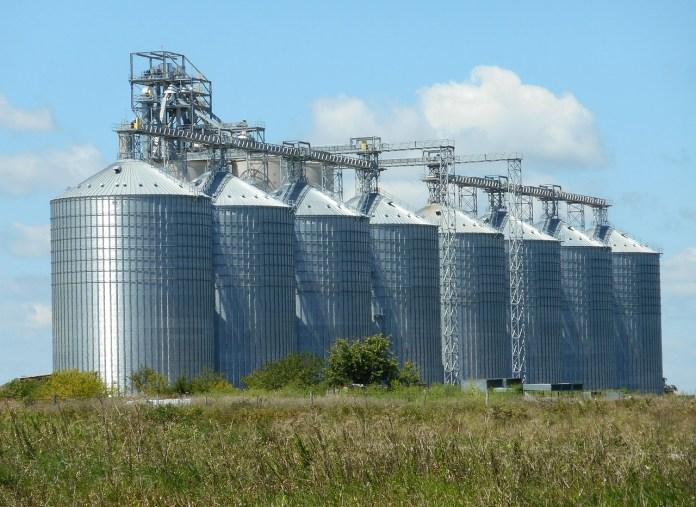 Za nami wzrostowy tydzień na giełdowym rynku zbóż i oleistych