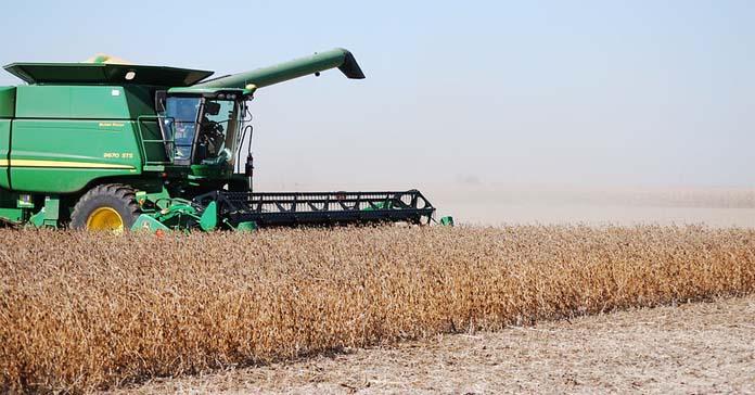 uprawa soi, soja, opłacalność uprawy soi,