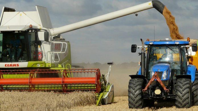 Prognoza zbiorów pszenicy, pszenica, zbiory pszenicy, BGŻ BNP Paribas,