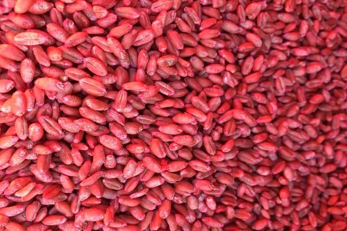 Zaprawianie nasion, zboża, zaprawa nasienna, rolnictwo zrównoważone, Polskie Stowarzyszenie Rolnictwa Zrównoważonego ASAP,
