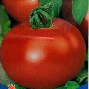 """Крупный и неприхотливый в уходе томат """"Семейный f1"""": выращиваем самостоятельно, избегая ошибок"""