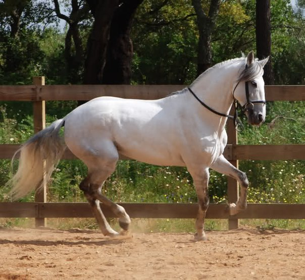 самые красивые лошади в мире фото
