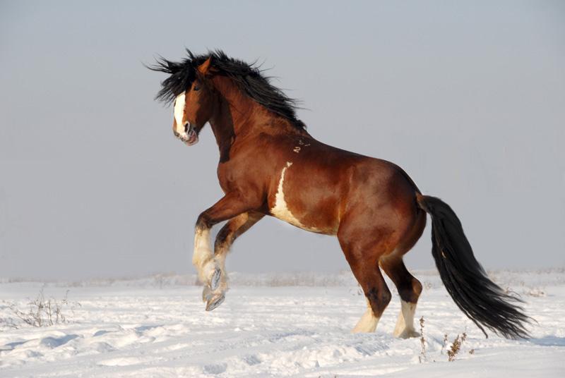 самый красивый конь в мире