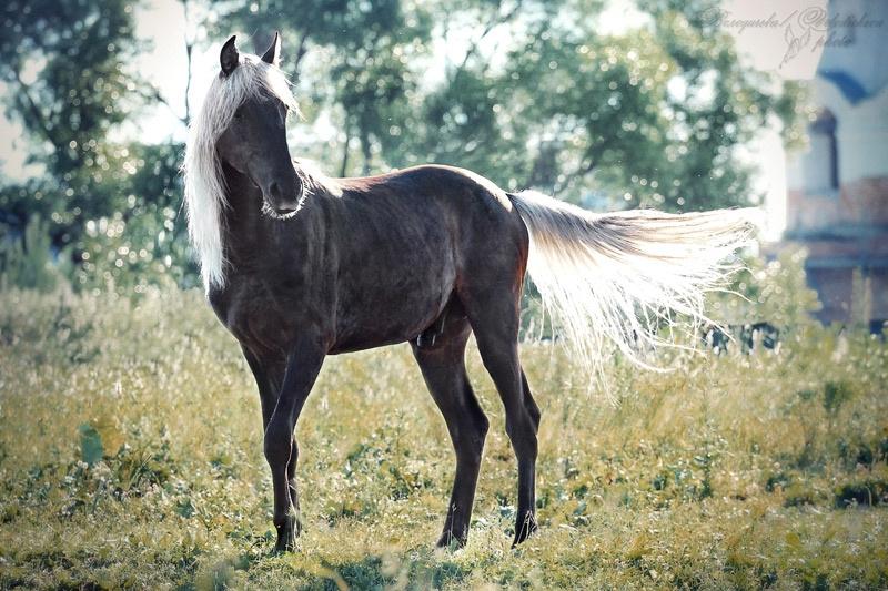 престижные лошади