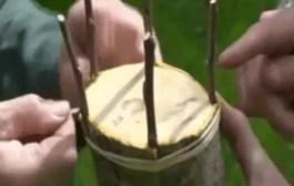 Vidéo .. Deux types de greffe sur Pommier