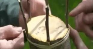 Deux types de greffe sur Pommier