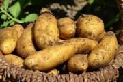 Historique de la pomme de terre