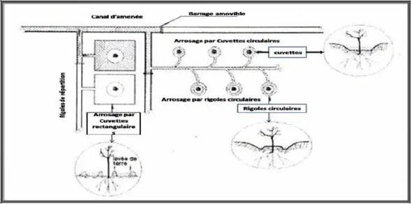 Figure: cuvette en arboriculture (d'après soltner, 1995).