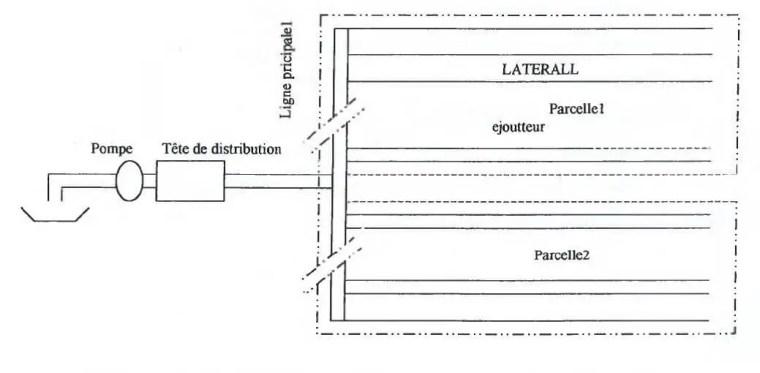 Fig. N°(3): Schéma d'une région dans laquelle doit être installée un système de goutte à goutte.  Source (ANNALES d'INA : 1976)