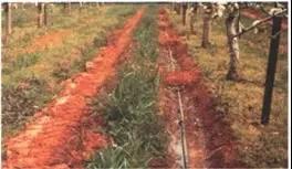 Fig. N°(13): Dispositif d'irrigation par ajutage