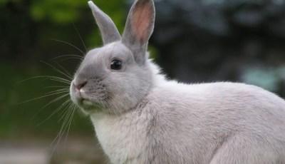 Santé et hygiène du lapin