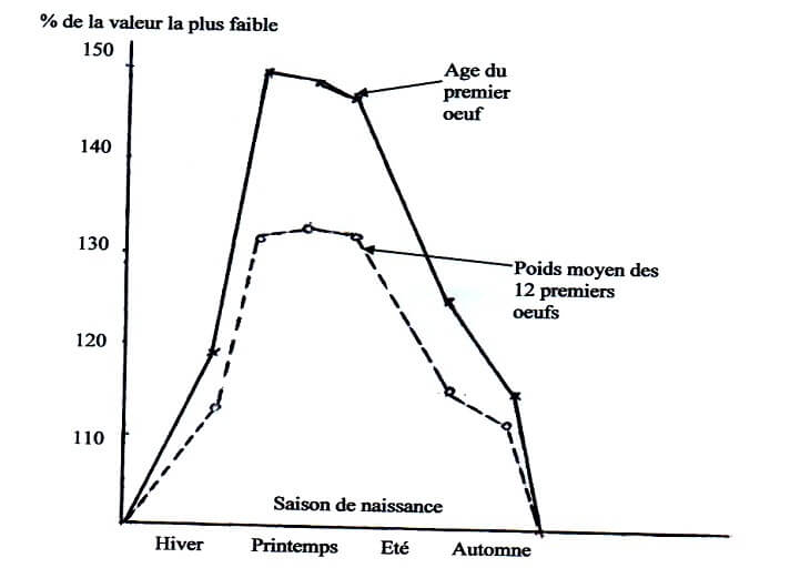 Fig. N°8 : Elevage des poulettes en lumière naturelle (d'après SAUVEUR, 1988)