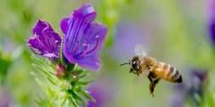 Systèmes d'élevages apicoles