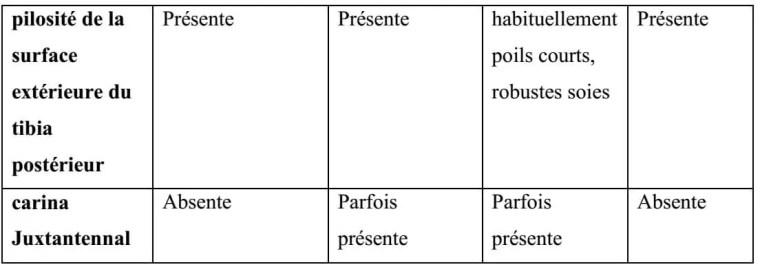 Tableau 1 : Caractéristiques morphologiques des quatre tribus des Megachilidae (Michener, 2007)