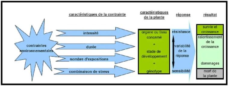 Figure 16: Facteurs conditionnant la réponse de la plante à un stress d'après (Bray et al, 2000 in Touchard, 2006).