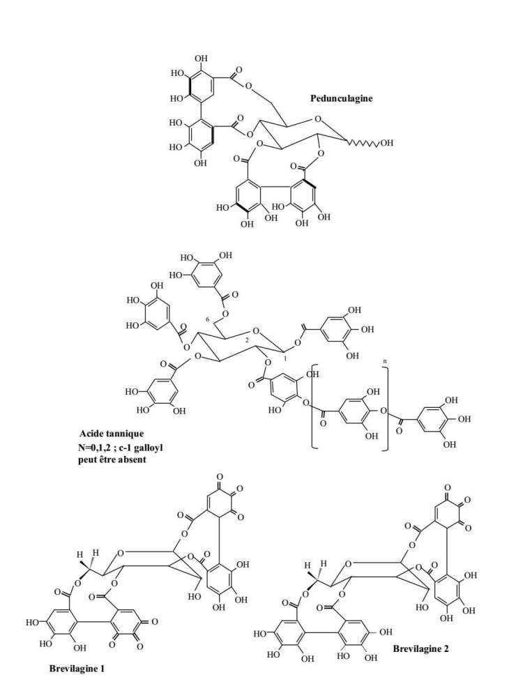 Figure 4 : Quelques tannins hydrolysables représentatifs (SEIGLER 1998).