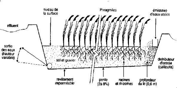 Figure III.1 : Epuration biologique par lagune. (Ramade, 1998) On classe généralement les étangs d'oxydation en trois catégories.