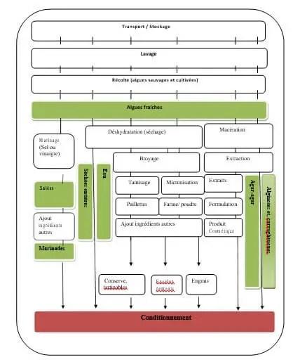 Figure 07: Schéma général des étapes de transformation des algues marines et leurs produits finis (Bouchaud et al., 2012).
