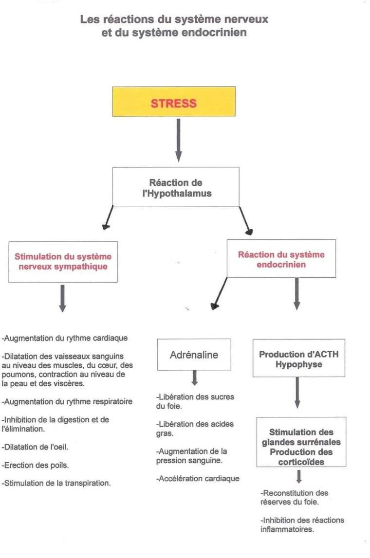 Figure N°9: principaux mécanismes impliqués dans les effets négatifs d'un stress lié à la chaleur sur la fonction de reproduction (CLAIRE ; ANDREW ; PONTER ; PATRICE ; 2003)