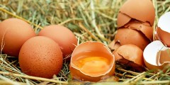 Effet du système d'élevage sur les paramètres de conformation et la composition des œufs de poule